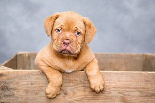 choisir une assurance pour chien